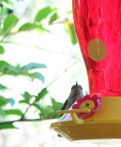 Red stuff in feeder